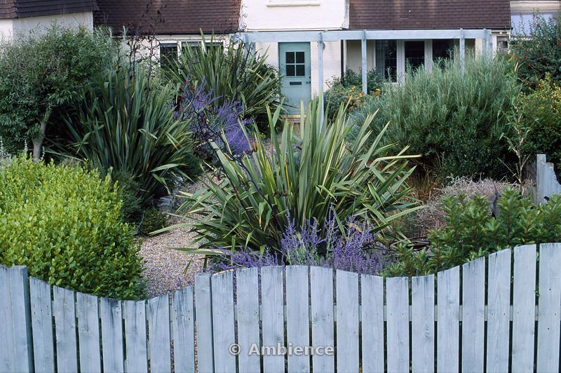 Seaside Garden Front With Blue Wooden Wave Shaped Fence Perovskia And Phormium Tenax