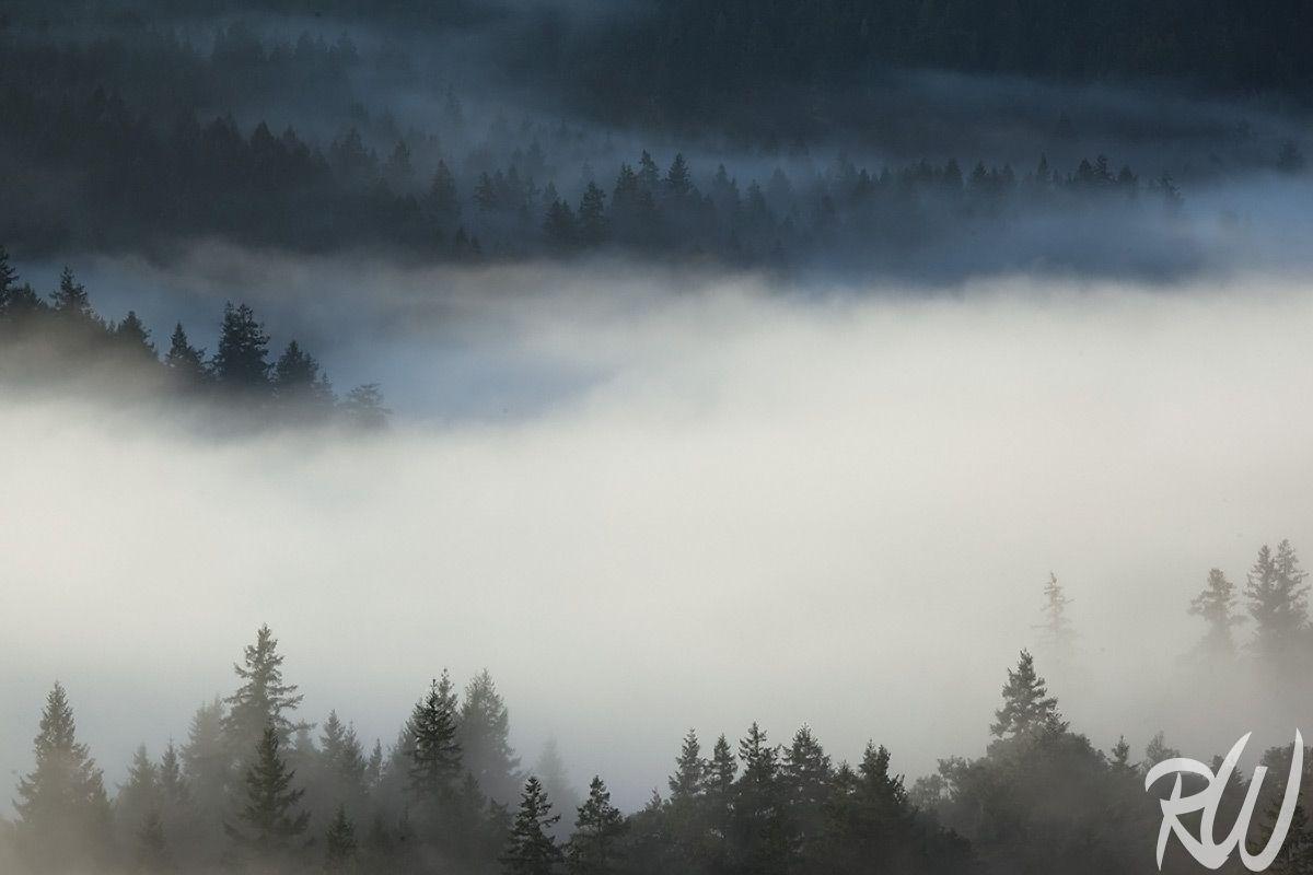 Sunrise Fog Over Mt. Tamalpais Watershed, Marin County, California.  http://www.rwongphoto.com/blog/mount-tamalpais-watershed/  #californiastateparks #fog #landscapes