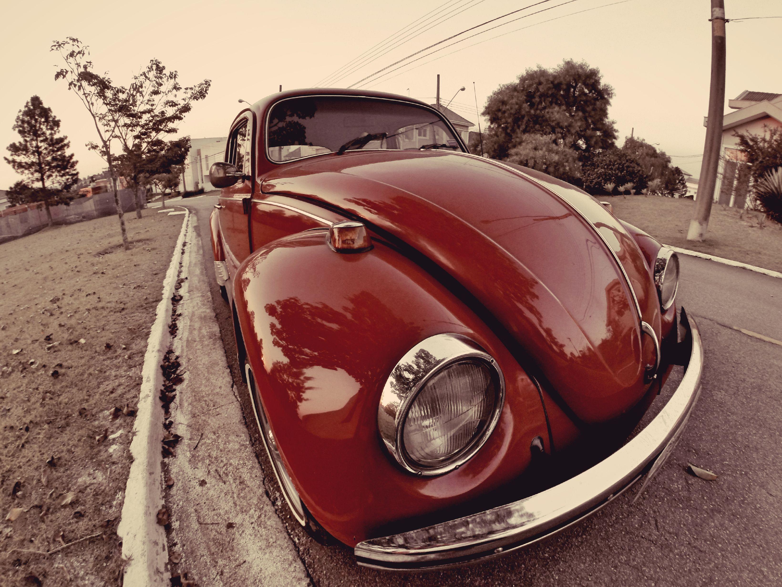 Beetle Photoshoot