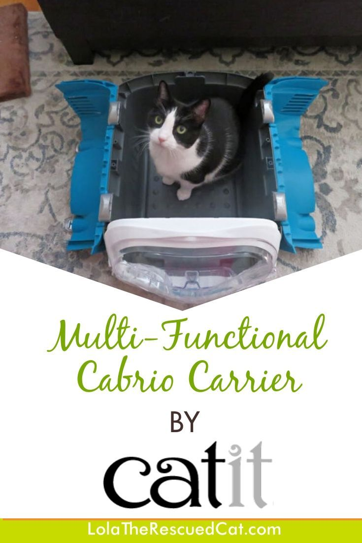 The Spacious And Comfy Cabrio Multi Functional Cat Carrier By Catit And A Giveaway Cat Carrier Soft Carrier Carriers