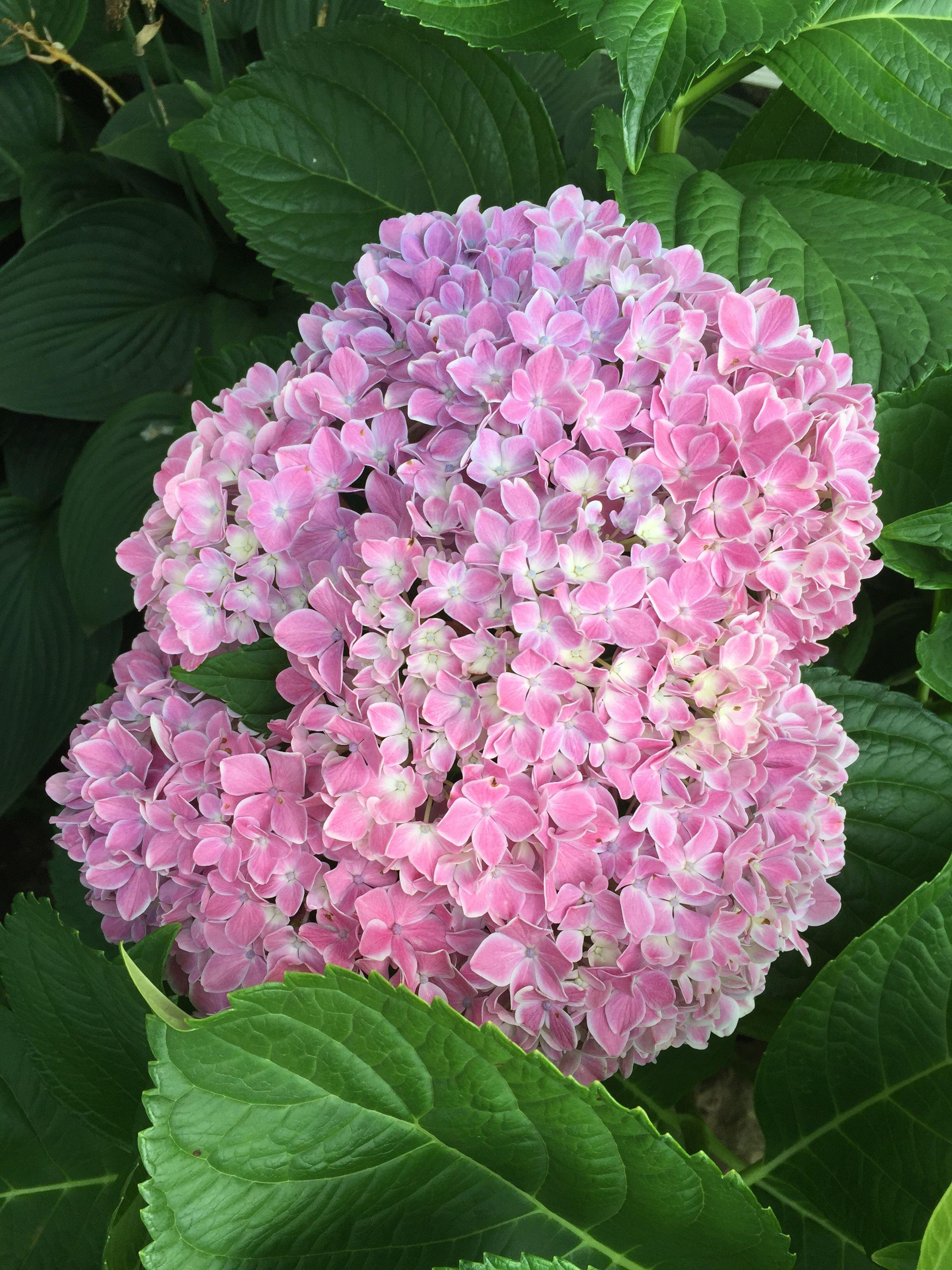 Pin by leslie bedene on plants u flowers pinterest