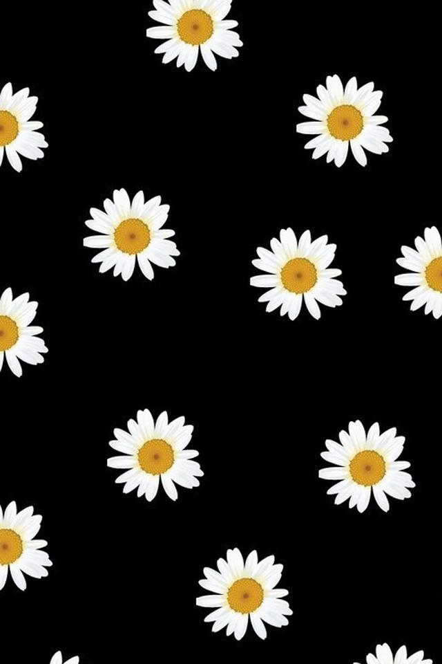 Best 25+ Daisy wallpaper ideas on Pinterest  Flower lockscreen, Daisy field and We heart it art