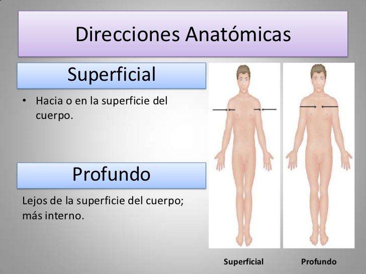 Resultado de imagen de direcciones anatomicas | Localización de ...