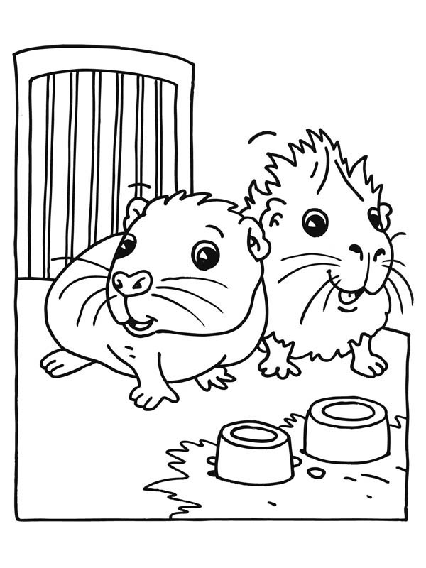 Epingle Sur Guinea Pig Coloring Pages