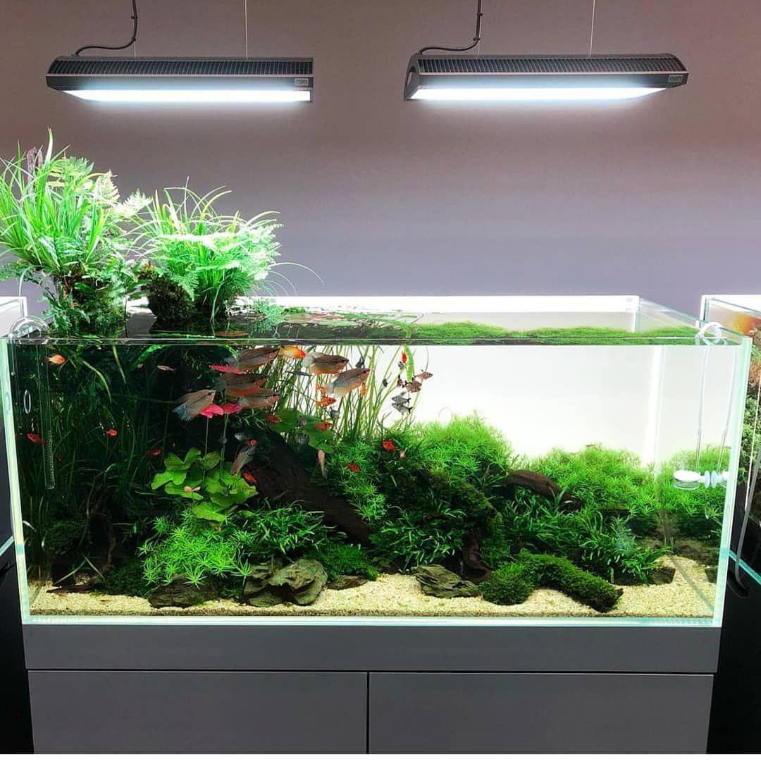 Planted Tanks Are Living Art Photo From Aquarevue Aquarium
