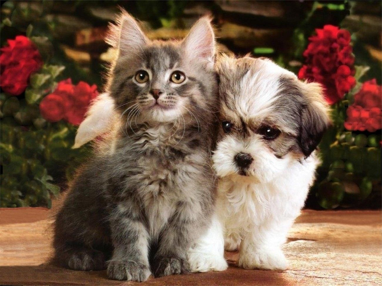 Puppies And Kitten Wallpaper Cute Puppies And Kittens Cute Cats And Dogs Kittens Cutest