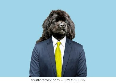 Contemporary art collage Funny dog in a suit as a businessman art collage space style head art design art dog dog