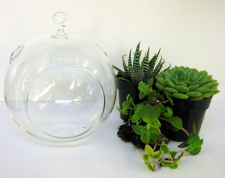 Diy succulent orb plant kit 2300 via etsy