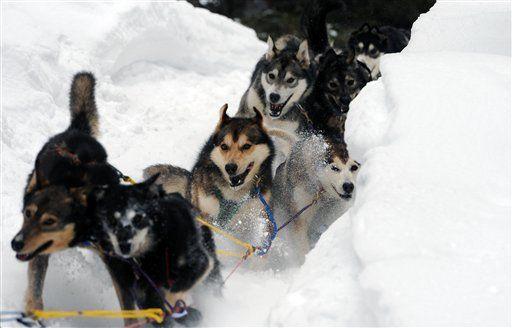 Iditarod Sled Dog Race Iditarod Alaska Adventures Dogs Sled