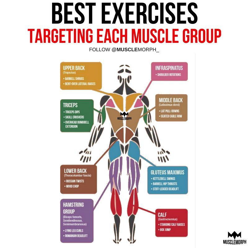 With Over 600 Muscles In Our Body It Is Easy To Forget Some