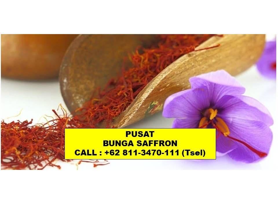 Premium Call 62 811 3470 111 Tsel Manfaat Putik Bunga Saffron Samarinda Indonesia Malaysia Penjual Bunga Bunga Gambar Bunga