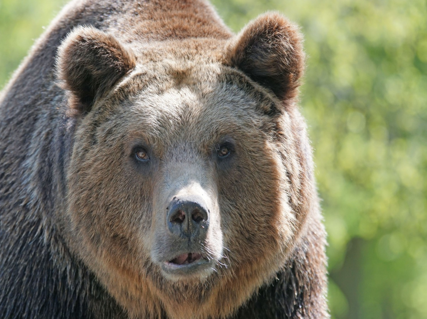 BEAR!!! One of our eco warriors, Bianca, went to see Brown Bears in Romania. Read about here story and see the experience here: