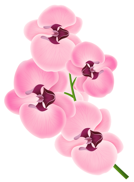 Pink Orchid PNG Clipart Image | png resimler | Pinterest