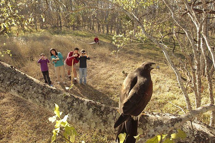 copy_of_MG_6387.jpg (697×464) Bald eagle, Wildlife