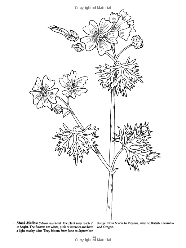 Wildflower Coloring Pages Portraits