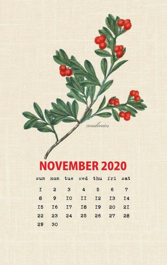 New Free of Charge November 2020 calendar Style ปฏิทิน