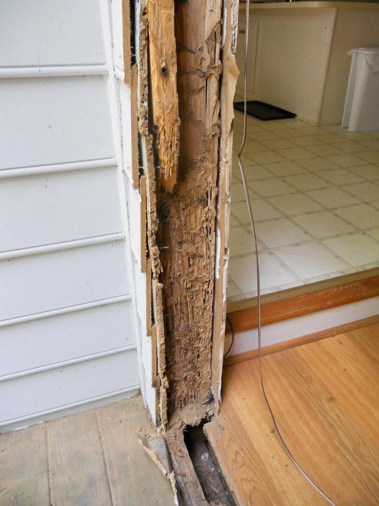 Image result for wood termite termite damage termite