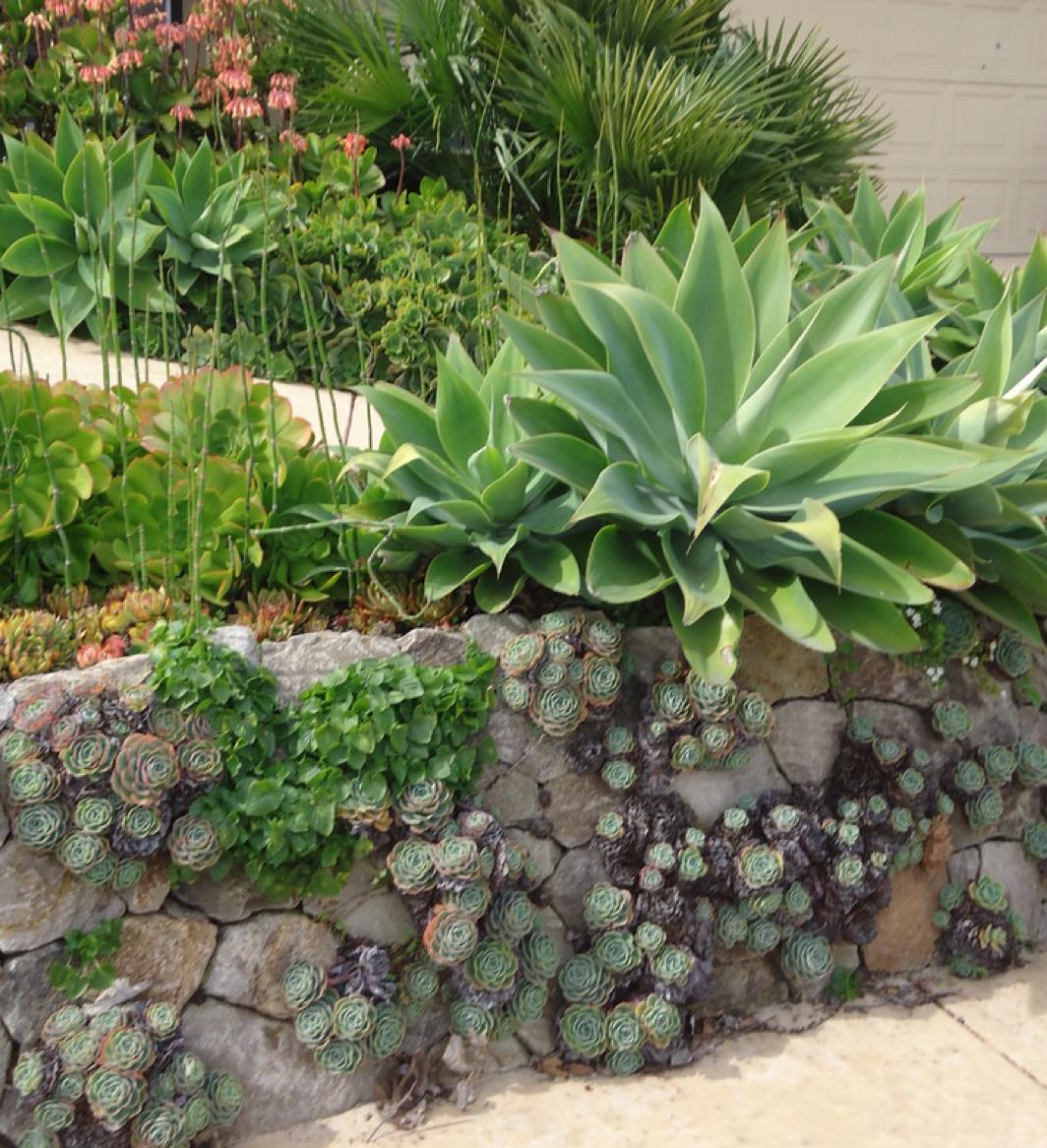 Succulent Landscape Design, Succulent