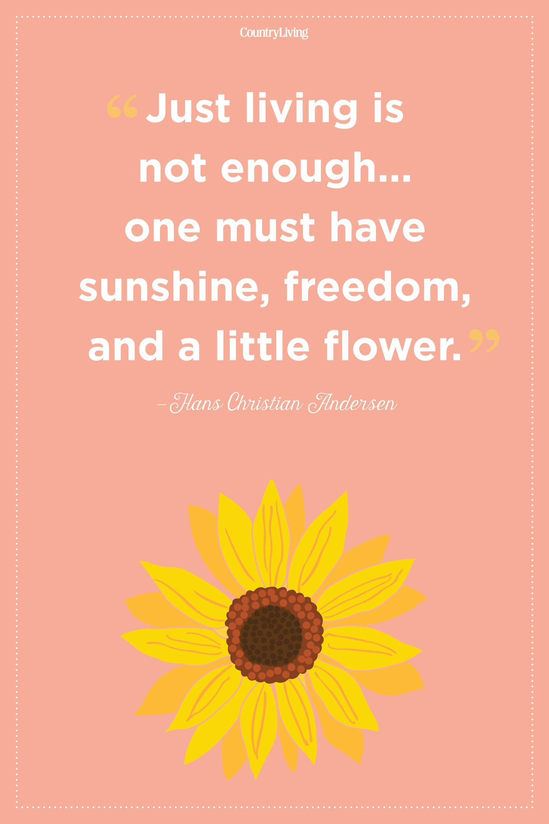 Flower Quotes To Inspire Growth Flower Quotes Inspirational Flower Quotes Love Flower Quotes