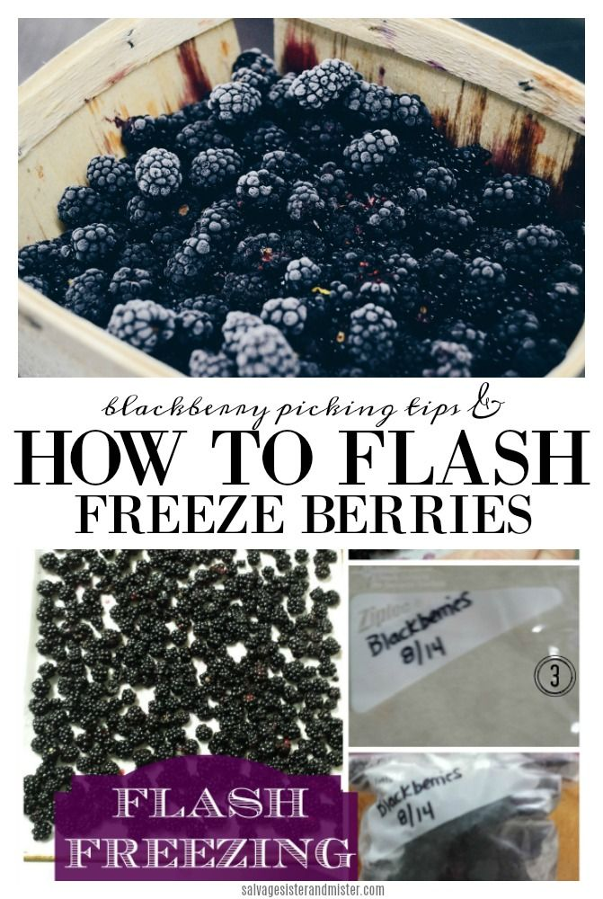 Learn to Flash Freeze Berries in 2020 Blackberry picking
