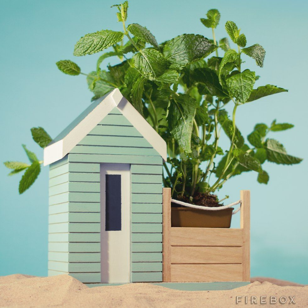 Beautiful hand-painted mini beach hut for you to grow your own ...