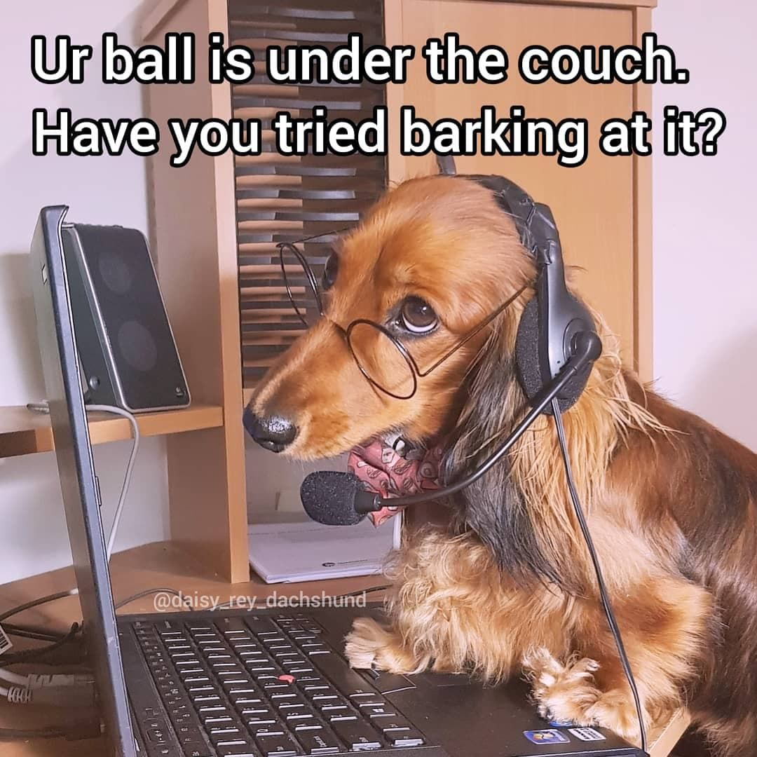 Dachshund Dog Memes Dog Memes Funny Dachshund Dachshund Memes