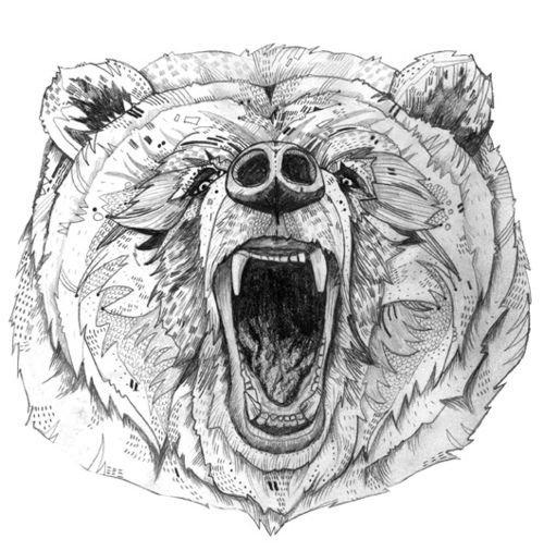 Grizzly Bear Drawing Tumblr