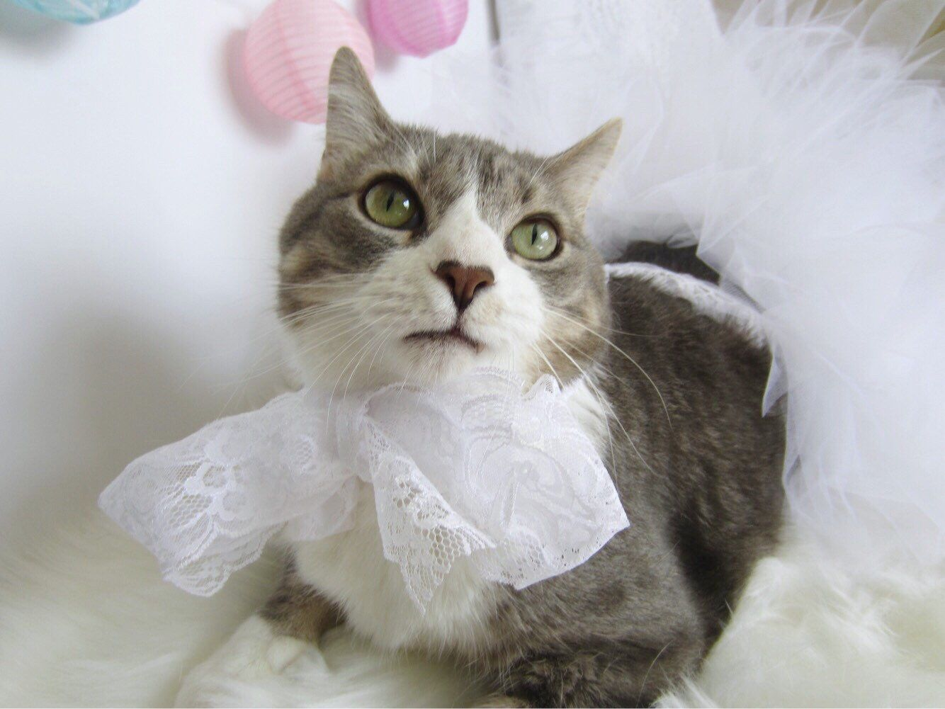 What A Cute Outfit To Use In Pictures Of Your Cat White Lace White Tutu Handmade Pet Handmade Tulle Tutu Dress