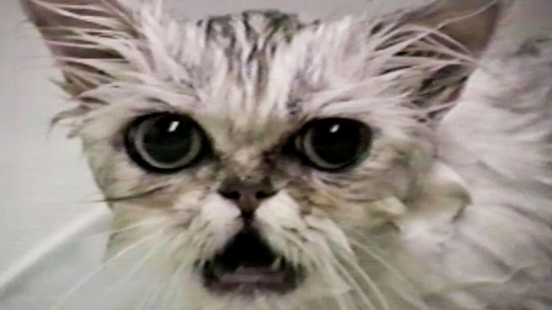 Cats Having A Worse Day Than You!