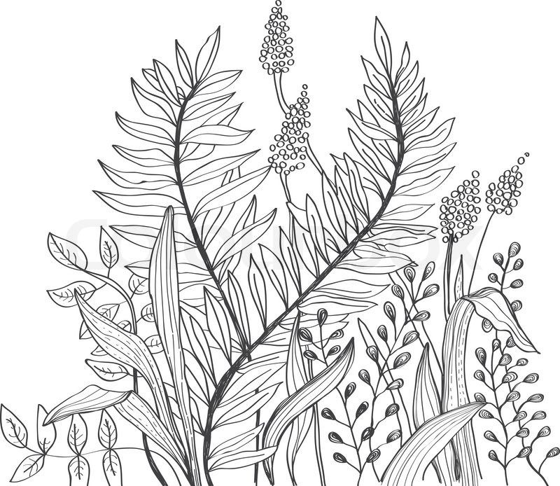 Line Drawing Flower Designs : Flower transparent background google search printables