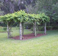 How To Build A Sturdy Grape Arbor Hunker Grape Arbor Garden