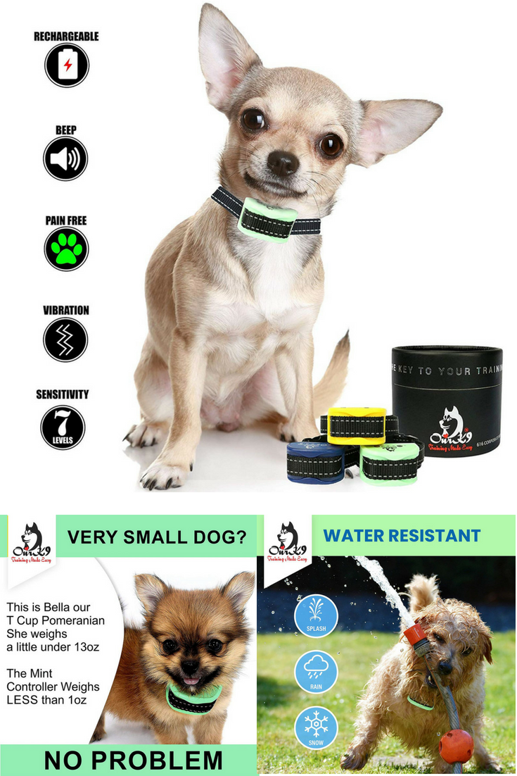 barking dog collars for small dogs