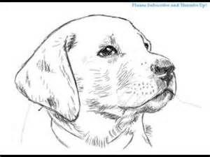 Hqdefault Jpg Dog Drawing Dog Drawing Simple Dog Face Drawing