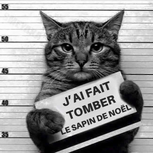 Chat coupable condamne sapin de noel mes preferes pinterest sapins de no l sapin et chats - Sapin de noel humour ...