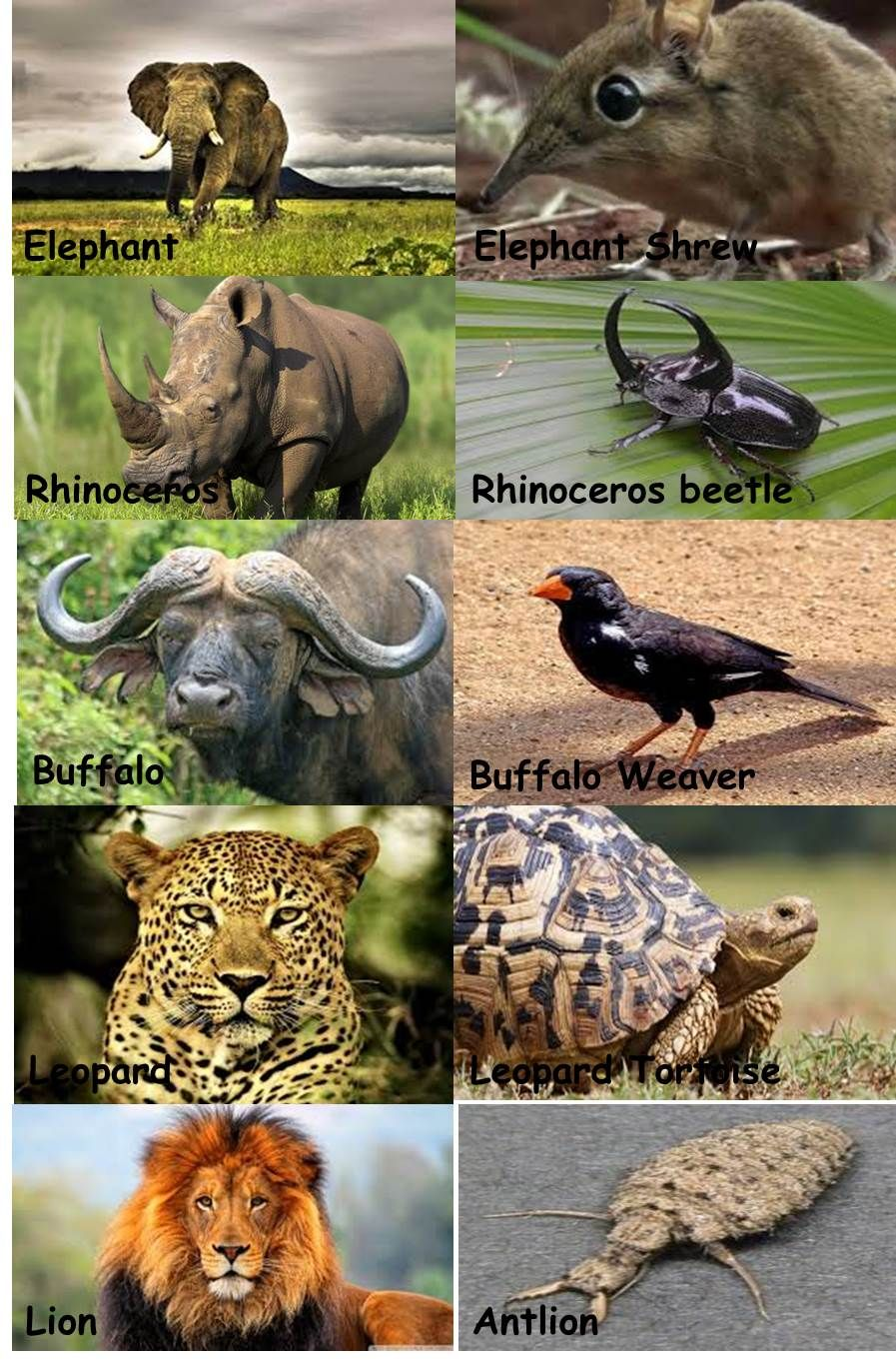 South Africa Big Five and Small Five Cute animals