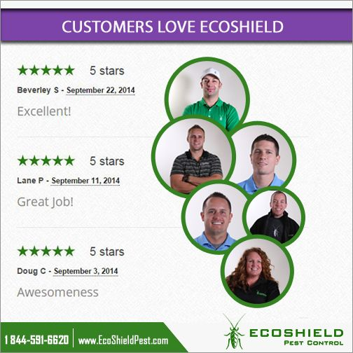 Great Reviews From Our Clients Pest Control Pest Control Services Understanding