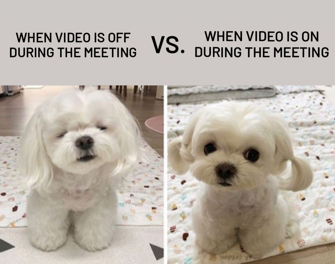 Accounting Memes Video Off And On During The Zoom Meeting Funny Animal Memes Animal Memes Funny Dog Memes
