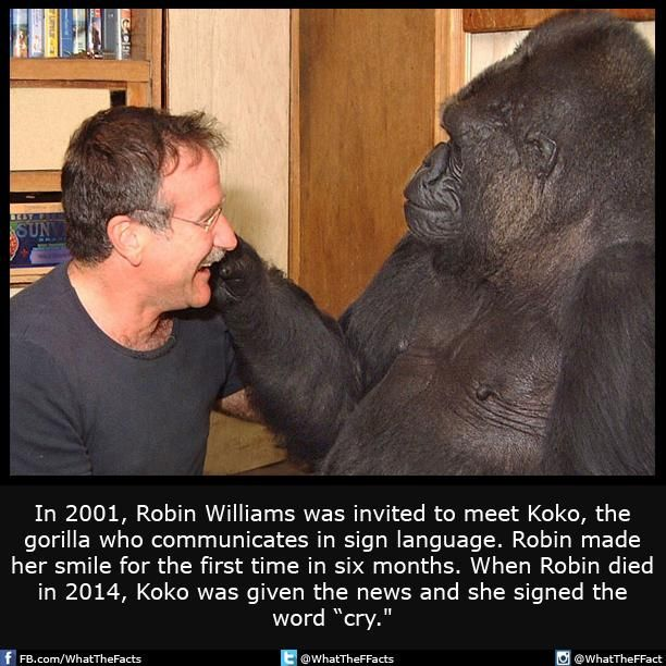What The F Facts On Twitter Fun Facts Ironic Memes Robin Williams