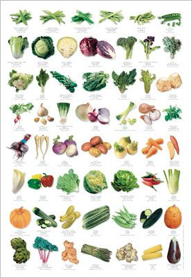 If You Need A Poster To Help You Identify Vegetables You Might Not Be Getting Enough Of Them Flower Chart Garden Plant Identification Creative Gardening