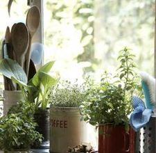 how to get rid of indoor plant flies