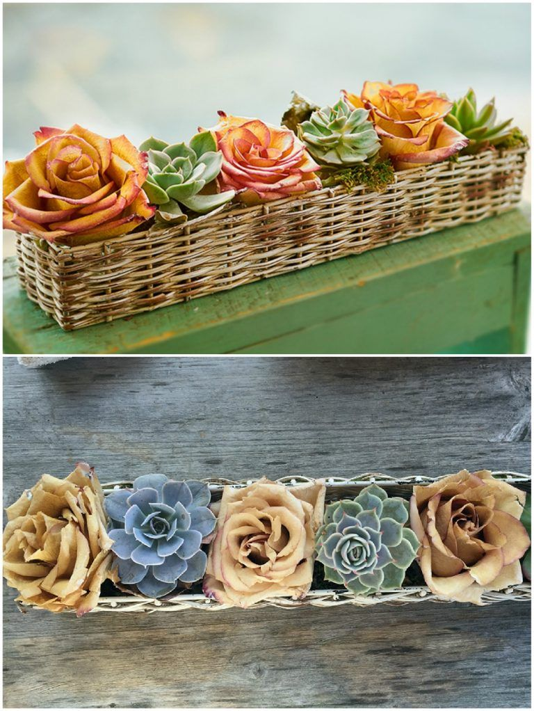 How to preserve roses with wax video instructions with