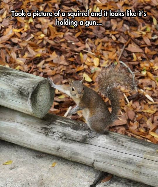 You Messed With The Wrong Squirrel