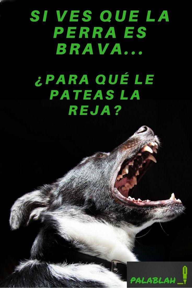 Para Que Te Fijes A La Proxima Humor Meme Memes Perro Memes Humor Perros