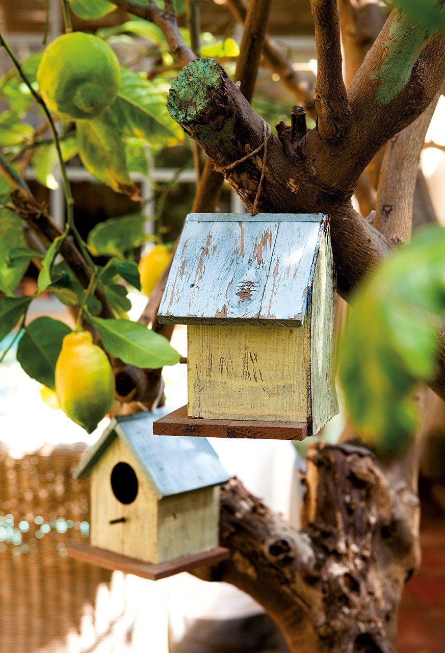 Casitas de p jaros decora los rboles con casitas peque as for Casitas de patio para almacenar