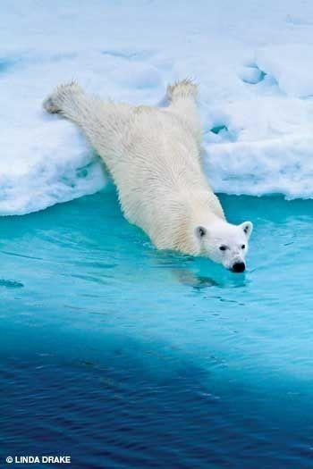 Photo by Linda Drake #bears