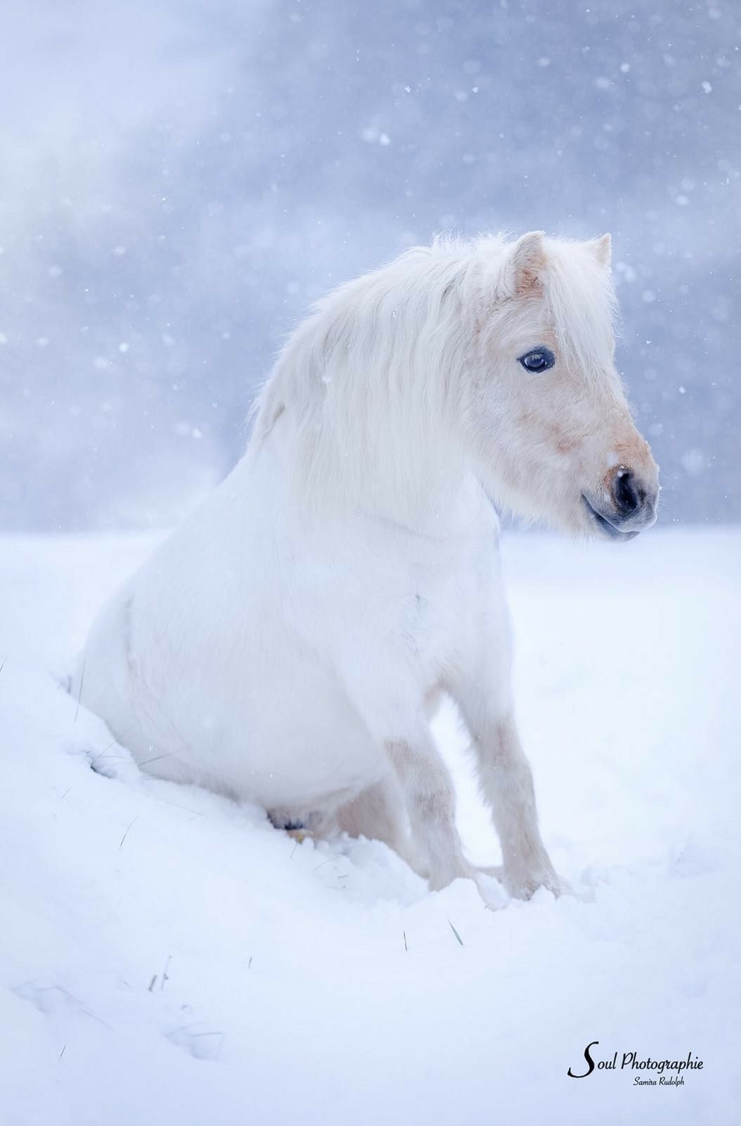Most Beautiful Small Living Rooms: White Fuzzy Pony Sitting In The Snow. So Cute!