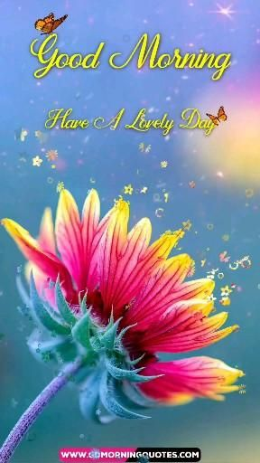 Good Morning Flowers Video, Good Morning, Flowers Video, Beautiful Video