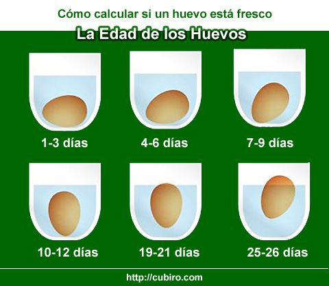 Cómo Saber Si Un Huevo Está Fresco La Edad De Los Huevos Recetas Hacks Cocina Alimentos