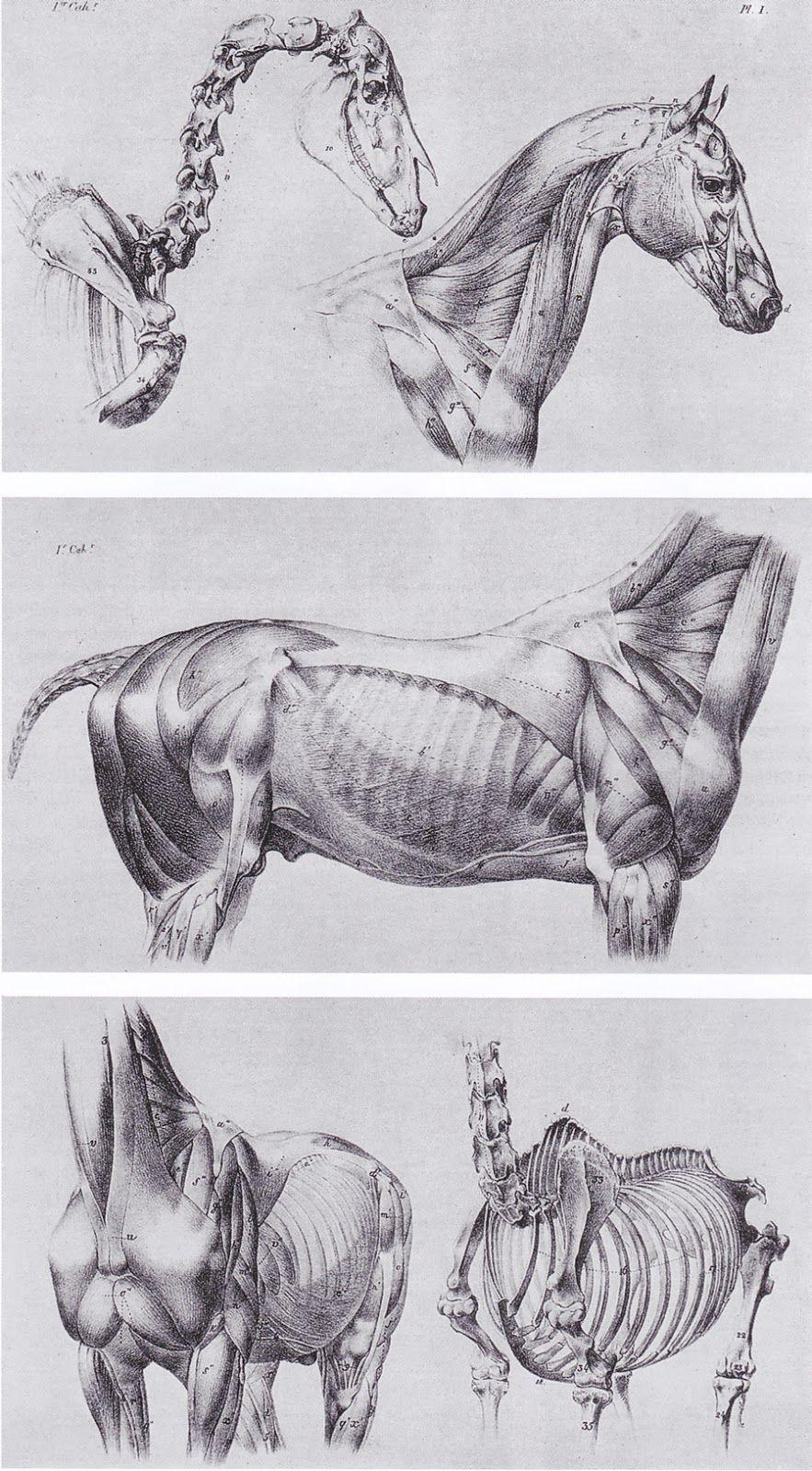 Inspirational Artworks Animal Art Horse Anatomy Pinterest