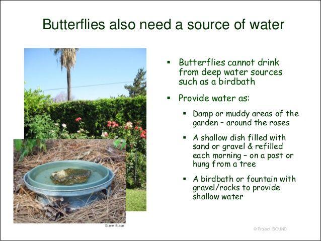 Butterfly Gardening 2009